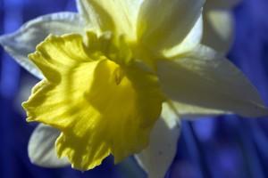 crw_4596-wb-lvl_bloemen_012