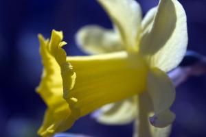 crw_4597wb-lvl_bloemen_013