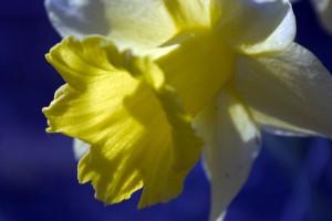crw_4599wb-lvl_bloemen_014
